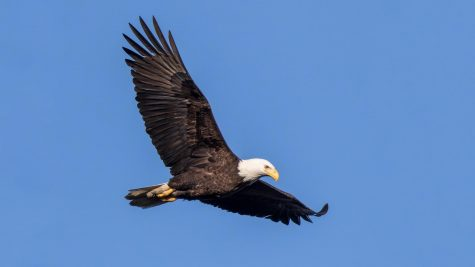 An Eagle Fly-By, Part 2